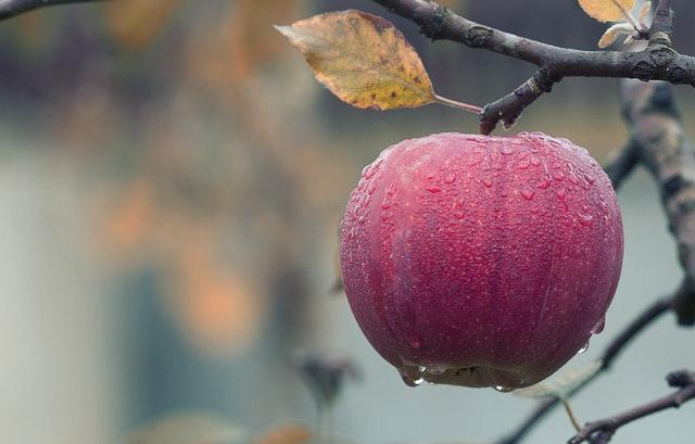 apple amazing facts