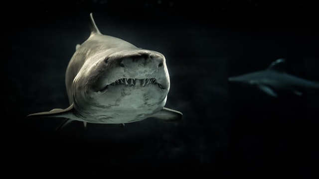 sharks amazing facts