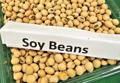Is Soy Bad For Men Does Soy Increases Estrogen